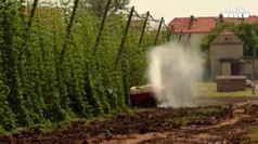 Coldiretti: sos contadini per prezzi bassi