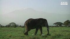 Cade bando a trofei di elefanti africani