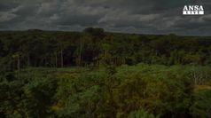Icaros, visioni dall'Amazzonia profonda