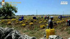 In agricoltura un lavoratore su 3 e' migrante
