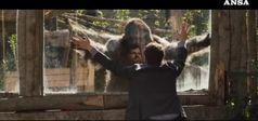 Se un gorilla ti salva il matrimonio