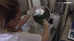 Gelato artigianale, 3mld business, piace ai fiori e salato