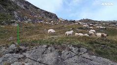 Transumanza delle pecore in Alto Adige
