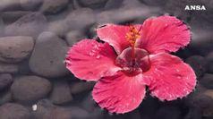Donne 'divine ' e Natura, LaChapelle firma calendario Lavazza