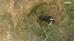 Cane bloccato su scogliera, salvataggio mozzafiato in Australia