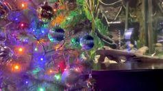 Natale nel mondo: le citta' si preparano a celebrare la festa