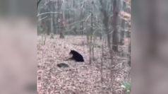 Usa, un orso irrompe all'Universita' del Tennessee