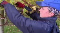 Cambiamento climatico rivoluziona modo di fare vino