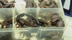 Sri Lanka, fermato alla dogana con 200 scorpioni vivi