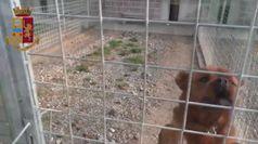 Titolare canile impediva adozioni animali, ingente truffa