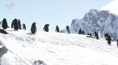 Venti gradi in Antartide, innalzamento mari piu' vicino