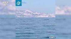 Avvistate due balenottere al largo di Marsiglia: effetto del lockdown