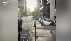 Coronavirus, in Australia canguro passeggia per le strade della citta'
