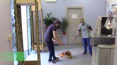 Fase 2, ripartono le toelettature per cani