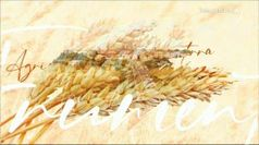 Latte e Parmigiano, l'oro bianco di Pegognaga